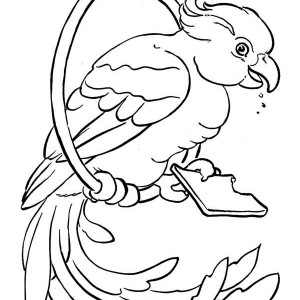 Beautiful Parrot Coloring Page