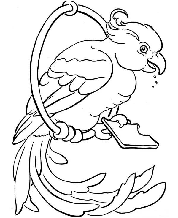 Free coloring pages of scarlet macaw for Scarlet macaw coloring page
