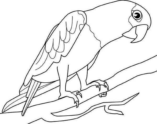 Exceptionnel Big Parrot Coloring Page