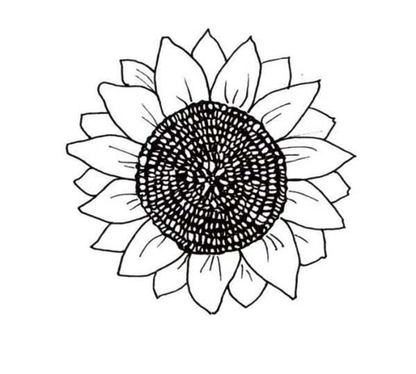 big sunflower coloring pages - photo#2