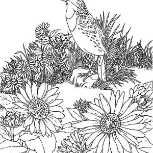 Bird and Sunflower Garden Coloring Page