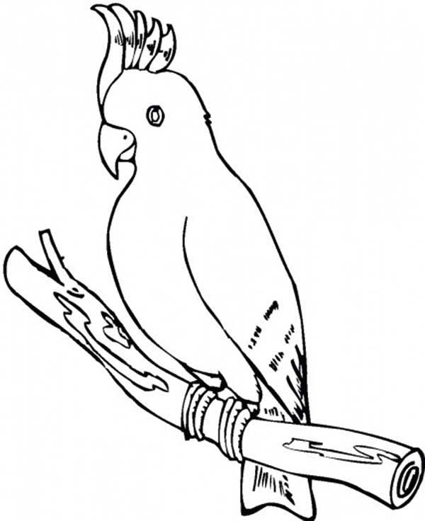 cockatoo parrot coloring page download print online coloring - Parrot Pictures To Color