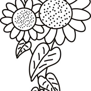 Sunflower is Blooming Coloring Page Sunflower is Blooming