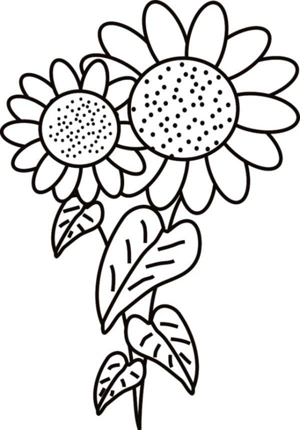 Fancy Sunflower Coloring Page  Download  Print Online Coloring