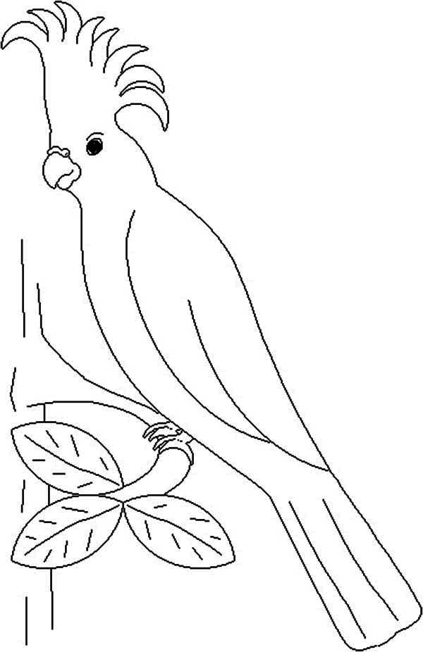 imperial parrot coloring page