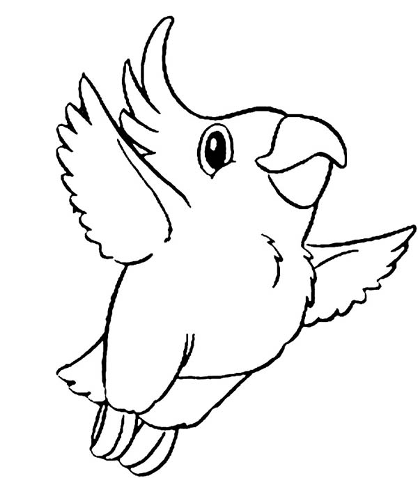 Kokapetl Parrot Coloring Page - Download & Print Online Coloring ...