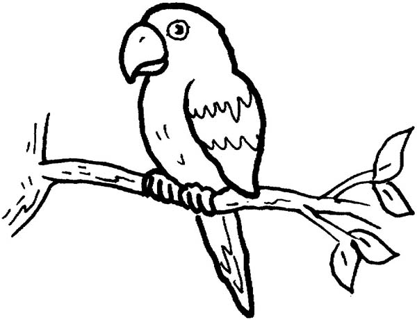 Charmant Little Parrot Coloring Page