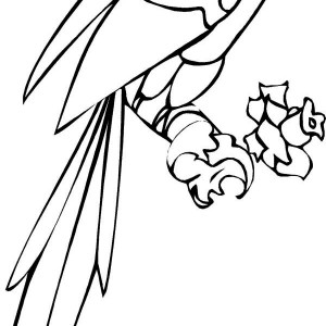 Long Tail Parrot Coloring Page
