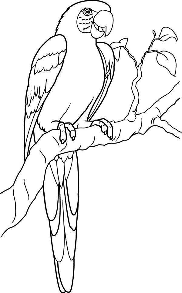 Lovely Parrot Coloring Page Download