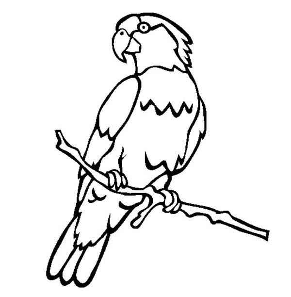 Flying Macaw Coloring Page Free Printable Coloring Pages Parrot