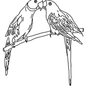 Mating Parrot Coloring Page