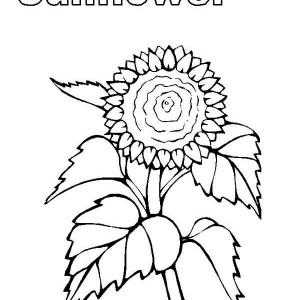 My Sunflower Coloring Page