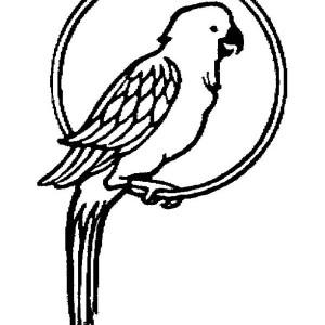 Parrot Pet Coloring Page