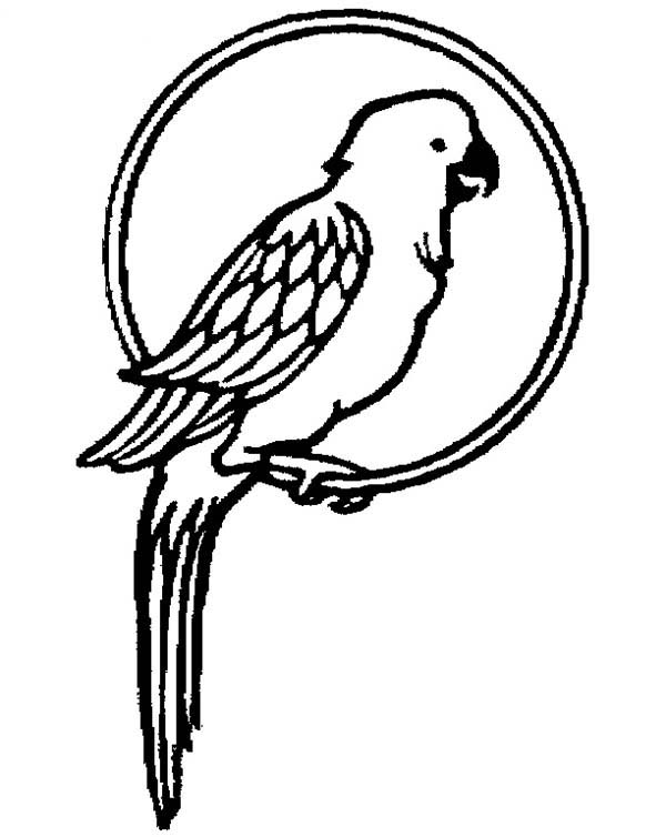 Parrot Pet Coloring Page - Download & Print Online Coloring Pages ...