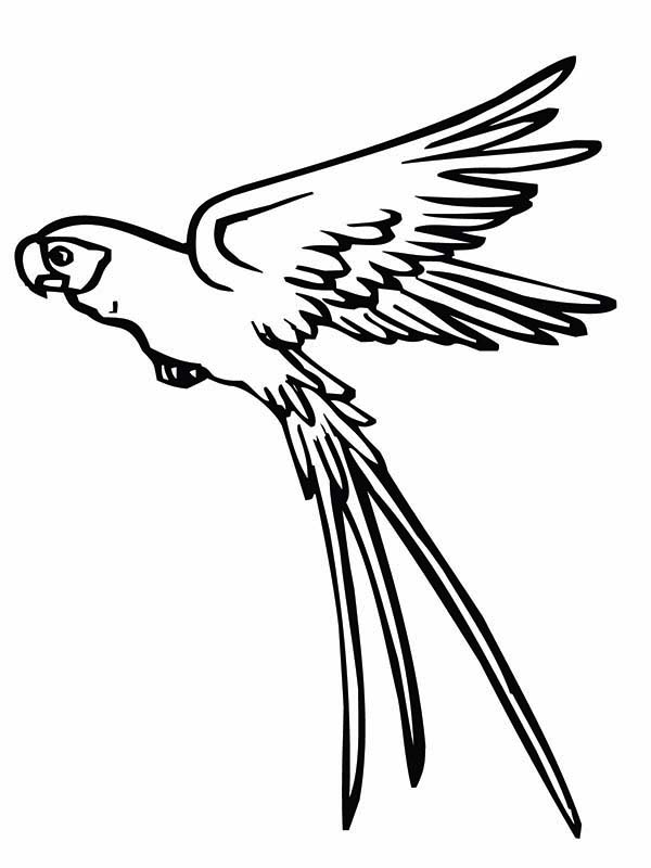 Parrot is Flying Coloring Page - Download & Print Online Coloring ...