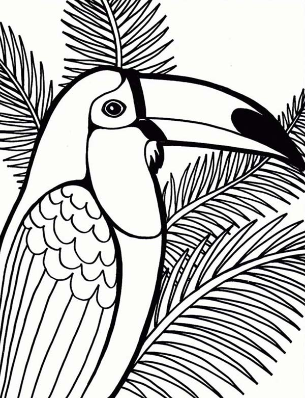 Parrot on Coconut Tree Coloring Page Parrot on Coconut Tree