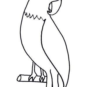 pet parrot coloring page
