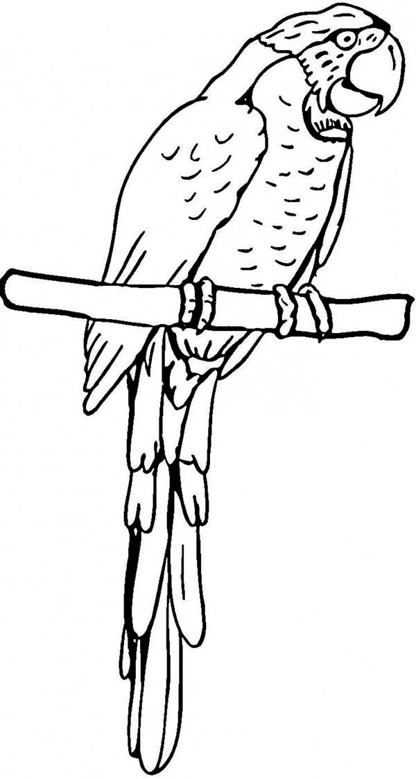 Parrot free colouring pages for Coloring pages parrot