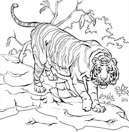 sumatran tiger climb down into the village coloring page