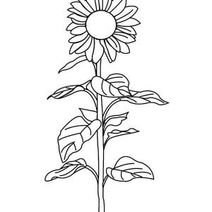 Sunflower Amazing Coloring Page
