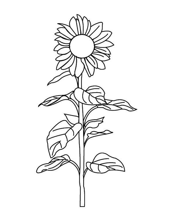 Sunflower Amazing Coloring Page Download Print Online Coloring