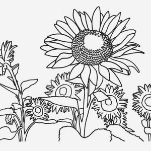 Sunflower and a Girl Coloring Page Sunflower and a Girl Coloring