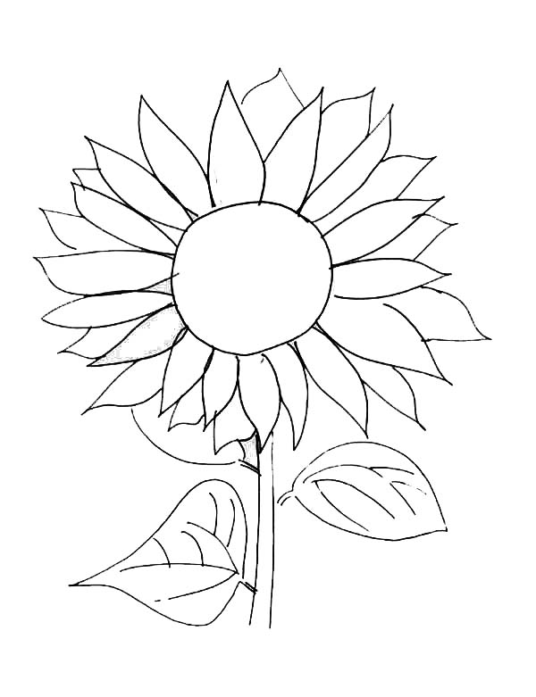 Sunflower Picture Coloring Page Download Print Online Coloring