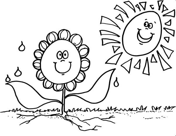 sunflower and sun coloring page