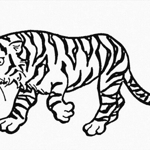 This Tiger Walking Very Carefully Coloring Page