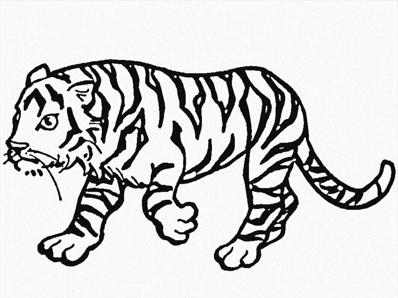 This Tiger Walking Very Carefully Coloring Page This
