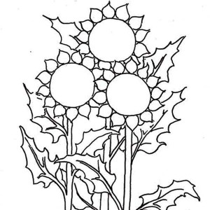 Three Sunflower Coloring Page