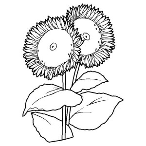 Two Sunflower Coloring Page