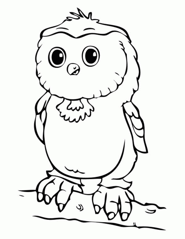 baby owl coloring page - Download & Print Online Coloring Pages for ...