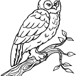 big horn coloring page for kids
