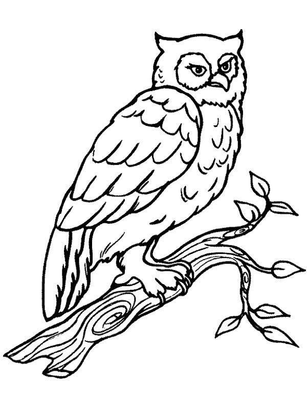 Owl Big Horn Coloring Page For Kids