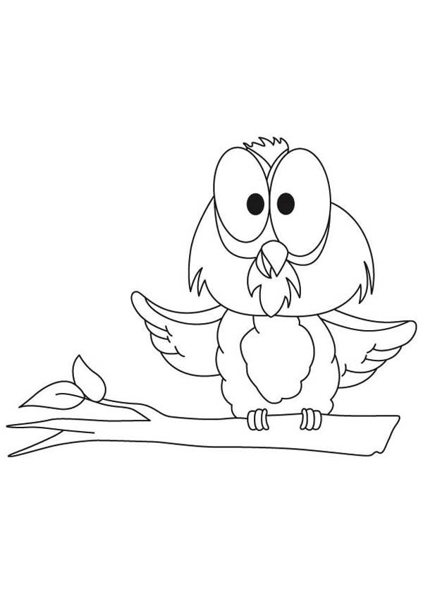 funny big eye owl coloring page Download Print Online Coloring