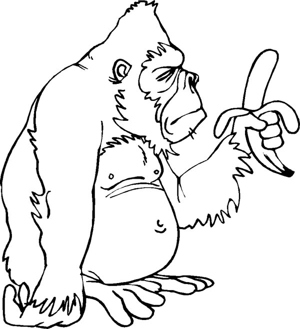 gorilla only has one banana page to coloring  Download  Print