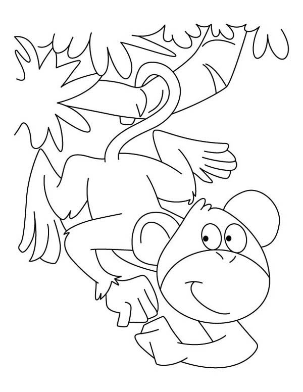 monkey can hanging on a branch with its tail coloring page - Coloring Pages Monkeys Trees