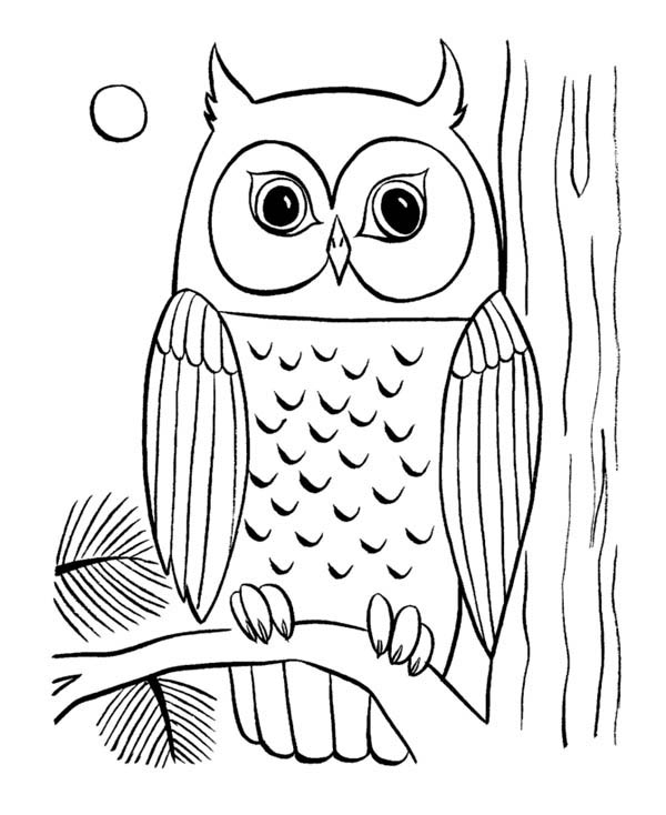 owl eye coloring page - Download & Print Online Coloring Pages for ...