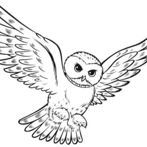 owl hunting for food coloring page