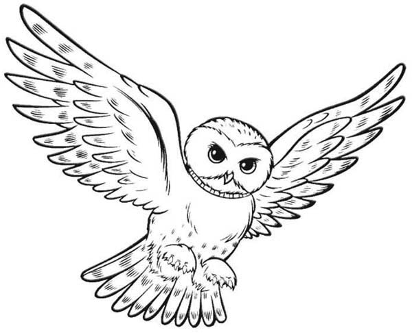 owl hunting for food coloring page - Download & Print Online ...