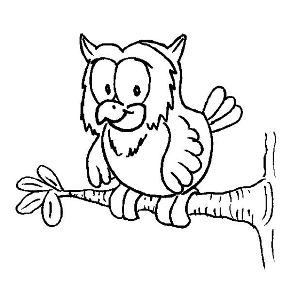 owl on a tree branch coloring page Download Print Online