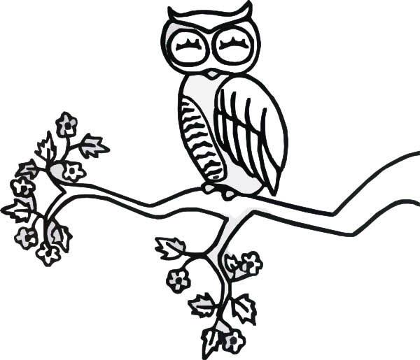 Sleeping Owl Coloring Page - Wiring Diagrams •