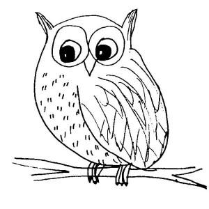 snow owl sketch coloring page