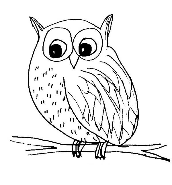 Snow Owl Sketch Coloring Page Snow Owl Sketch Coloring