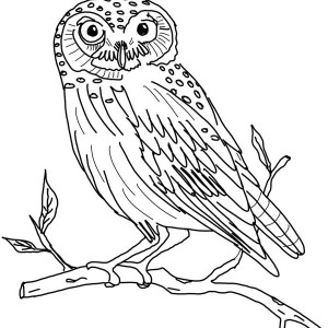 the little owl coloring page