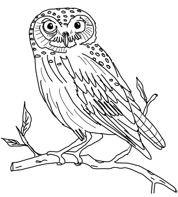 the little owl coloring page - Download & Print Online Coloring ...