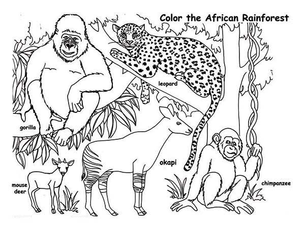 African Rainforest Animals Coloring Page Download Print Online