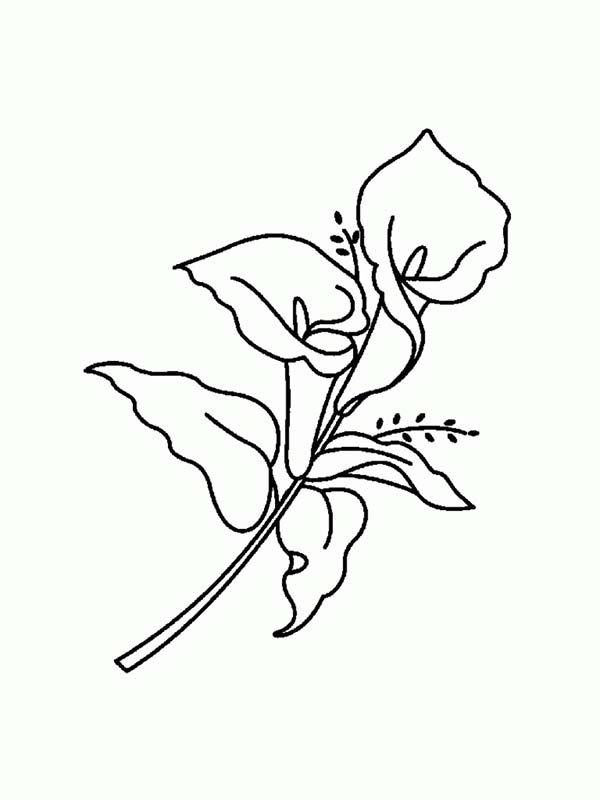 Amazing lily flower coloring page download print for Lily flower coloring pages