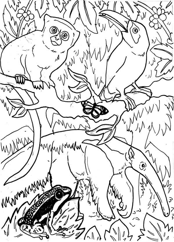 Amazing Rainforest Animals Coloring Page